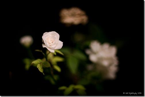 VUP_Flower (W)